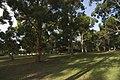 Cronulla - panoramio (81).jpg