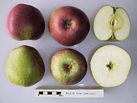 Cross section of Belle de Tours, National Fruit Collection (acc. 1947-295).jpg