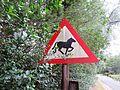 Crossing horses.JPG