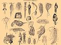 Crustacea. Brockhaus and Efron Encyclopedic Dictionary b51 224-3.jpg