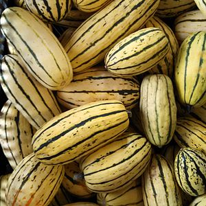Delicata squash - Delicata squash from Green Mountain Girls Farm.