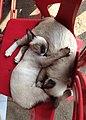 Cuddles (11625276693).jpg