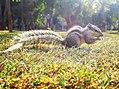 Cute squirrel lays.jpg