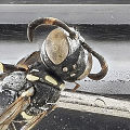 Cuvette Quartz wasp (9736086092).jpg