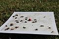 Cydia pomonella trap 2012-06-05.jpg