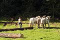 Débardage JEAN BAPTISTE RICARD mondial du cheval percheron 2011Cl J Weber01 (23455261894).jpg