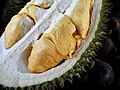 D1 - Durian.jpg