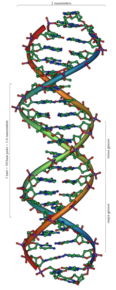 Ficheiro:DNA Overview.png