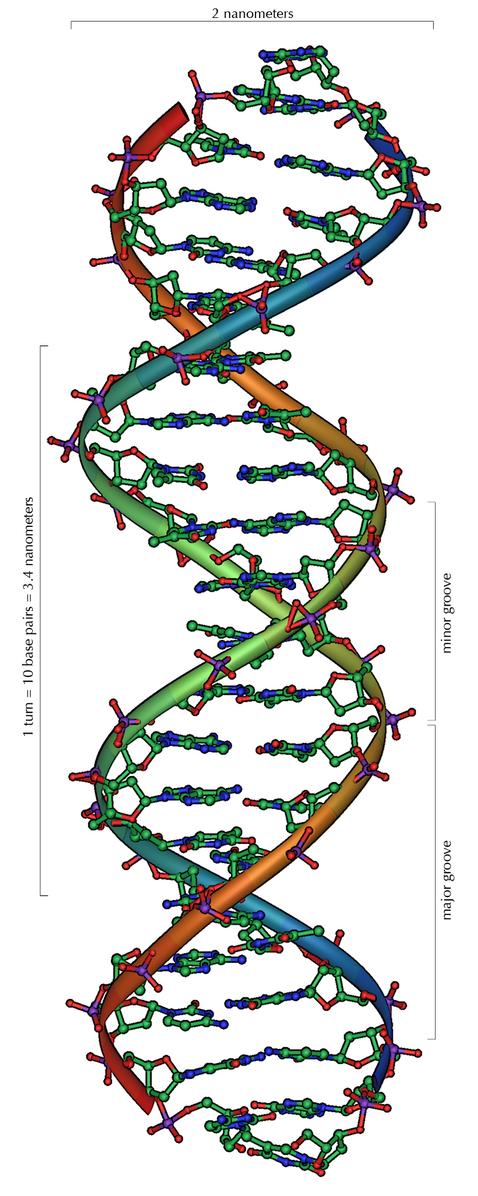 DNA Aufbau erklären?