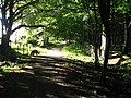 Dappled light - geograph.org.uk - 922506.jpg