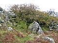 Dartmoor, Cox Tor - geograph.org.uk - 1031276.jpg