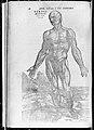 De humani corporis fabrica (Of the Structure of the Human Body) MET MM43262~1.jpg