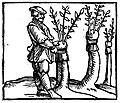 De omnibus agriculturae partibus et de plantarum et animalium generibus.jpg