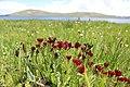 Deosai National Park Skardu.jpg