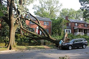 June 2012 North American derecho - Tree and power lines down in Washington, D.C.