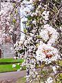 Des fleurs au parc du château d'eau à Colmar.jpg