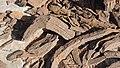 Detail of Liesegang Rings Fragments.jpg