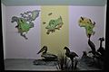 Diorama - Birds of North America Europe and Africa - Zoological Gallery - Indian Museum - Kolkata 2014-04-04 4402.JPG