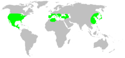 Distribution.leptonetidae.1.png