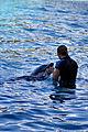 Dolphin Cove 28.jpg