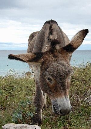 Donkey 05.jpg
