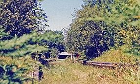 Overgrown and derelict railway platforms