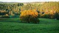 Dub u Palečkova mlýna podzimní západ slunce.jpg
