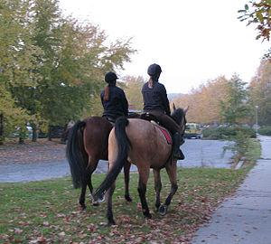 Buckskin (horse) - Undiluted bay and buckskin horse abreast.