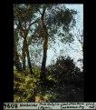 ETH-BIB-Korkeiche, Grande Kabylie (Algérie)-Dia 247-08094.tif