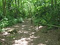 Easy Access Path in Perry Wood - geograph.org.uk - 1370472.jpg