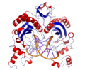 EcoRV Crystal Structure.rsh.png