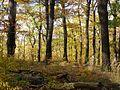 Eichenwald.jpg
