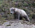 Eisbaerbabies Tierpark Hellabrunn-7.jpg