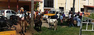 Elavumthitta - A busy day at Elavumthitta cattle market.