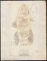 Eleotris macrolepidota - 1700-1880 - Print - Iconographia Zoologica - Special Collections University of Amsterdam - UBA01 IZ13600097.tif