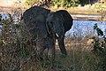 Elephant, Ruaha National Park (34) (28109339433).jpg