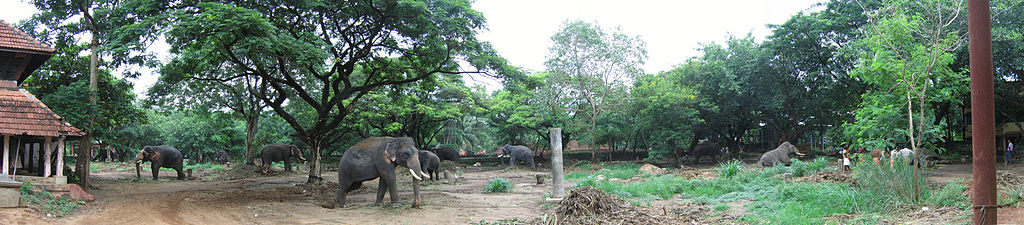 Una escena del centro de elefantes de Punnathur cerca de Guruvayur, Kerala, India.