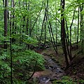 Elizabeth Township, PA, USA - panoramio (16).jpg