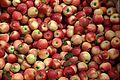 Elstar Äpfel 2.jpg