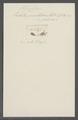 Enchelis punctifera - - Print - Iconographia Zoologica - Special Collections University of Amsterdam - UBAINV0274 113 13 0024.tif