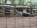 Equus zebra hartmannae Yumemigasaki Zoo P9270211.jpg