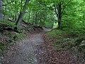 Erkensruhr valley to Gierberg 06.jpg