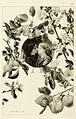 Ernst Klimt 1889.jpg