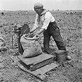 Erwtenpluk begonnen (Oudenbosch). Erwten worden op het land gewogen, Bestanddeelnr 902-2516.jpg