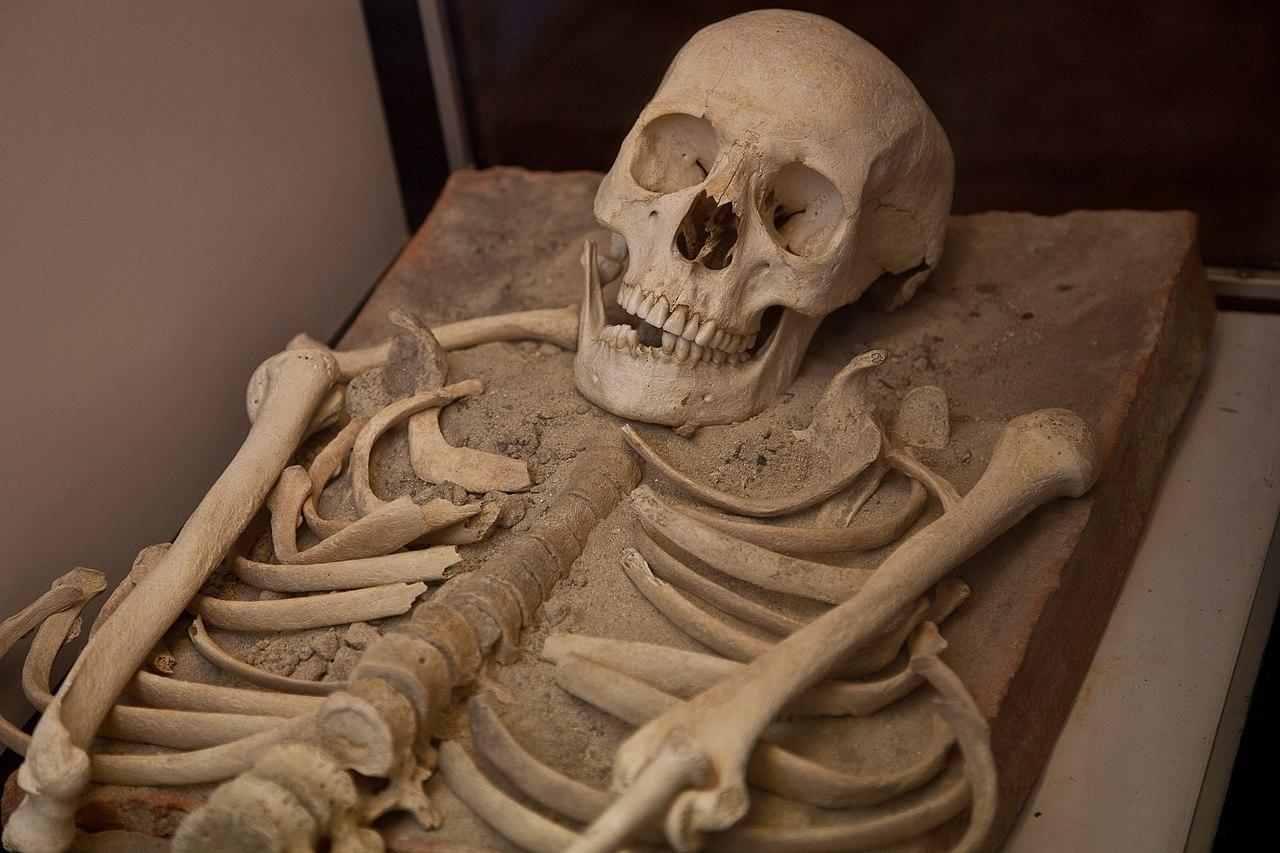 Esquelete de necrópole romana (7326104804).jpg