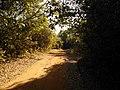 Estrada para Rio Verde - panoramio (1).jpg