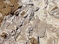 Ethiopie-Exploitation du sel au lac Karoum (3).jpg