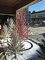 Evergleam Trees- Manitowoc, WI - Flickr - MichaelSteeber.jpg
