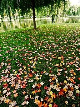 Fall in the Boston Public Garden, Boston, Massachusetts