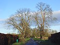 Farm road, Arborfield - geograph.org.uk - 664351.jpg